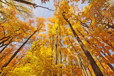 Fall Colors in Brown County State Park photo