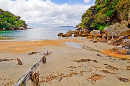 Harrold Bay on the Ackers point trail in New Zealand