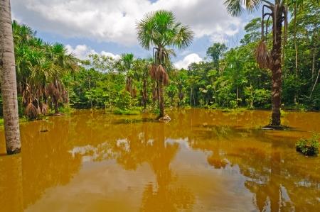 amazon rain forest: Lagoon in the Amazon Rain Forest Near the Napo River