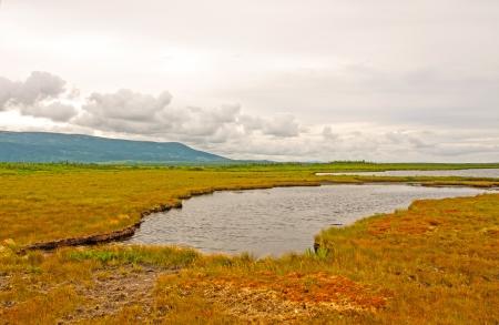 morne: Bogs along the Western Brook Pond Trail In Gros Morne National Park