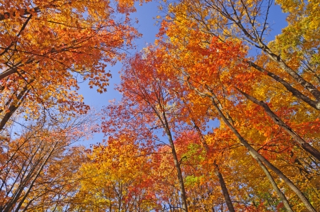 Colorful trees in Brown County State Park in Indiana photo