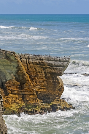 promontory: Spotted Shags on a Promontory in New Zealand