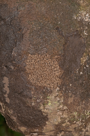 amazon rain forest: Exposed section of a termite nest in a Amazon Rain Forest Stock Photo