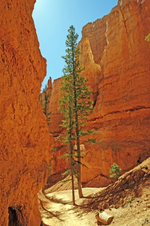 Isolated Pines along the Navajo Trail in Bryce Canyon national park Stock Photo - 22734710