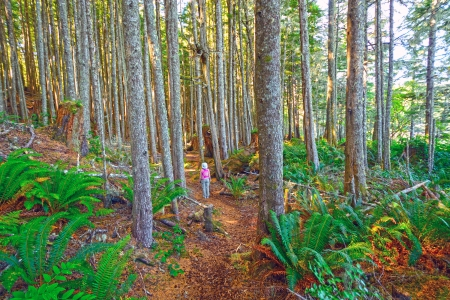 hardy: Hiker on the Tex Lyon Trail in Port Hardy, British Columbia