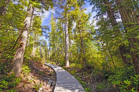 hardy: The Commuter trail Near Port Hardy, British Columbia Stock Photo