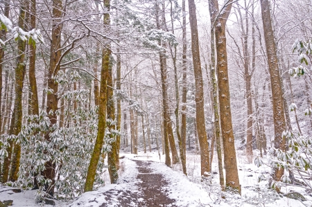 The Big Creek trail in the Smoky Mountains During a Spring Snow Stock Photo - 24442045