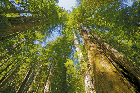 Sunny Day in Redwoods National Park in California Stock Photo