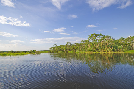 blackwater: Sunny Day on a Blackwater Tributary of the Amazon