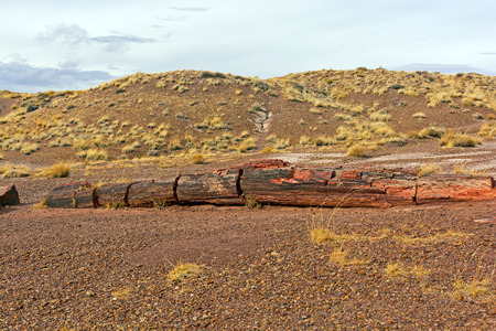 Petrified Log in Petrified Forest National Park in Arizona photo