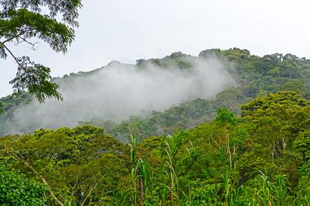 Nuage de forêts en Forêt impénétrable de Bwindi en Ouganda Banque d'images - 31051586