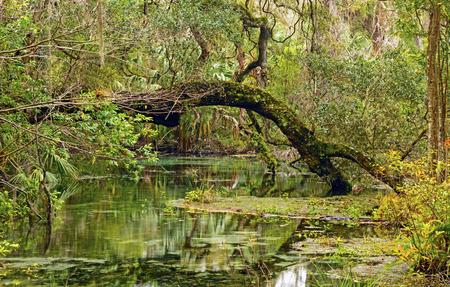 eau stagnante: Backwater Slough � Rainbow Springs State Park en Floride Banque d'images