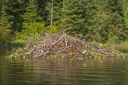 sioux: Beaver Lodge on Berry Creek in Ontario