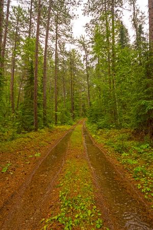 sandbar: Forest Road on a Rainy Day in Sandbar Lake Provincial Park in Ontario