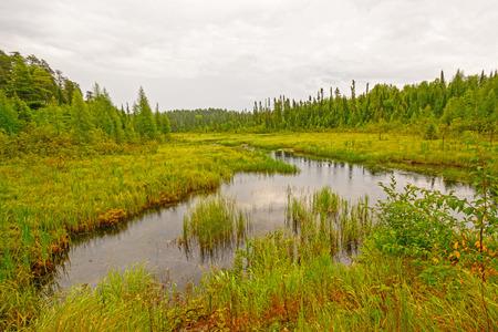 north woods: Quiet Creek in a North Woods wetlandin Sandbar Provincial Park in Ontario