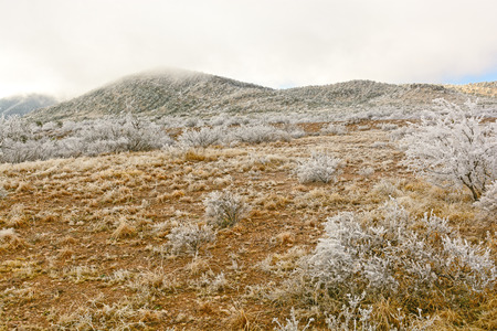 ice storm: Desert after an Ice Storm near Alpine, Texas Stock Photo