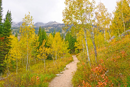 jenny: Aspen in Fall Colors on the Jenny Lake Trail in Grand Tetons National Park in Wyoming