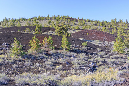 craters: New Vegetation on a Volcanic Landscape at Craters of the Moon National Monument in Utah