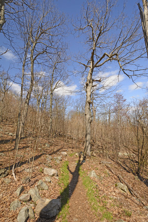 appalachian trail: Trees and Shadows on the Appalachian Trail in Shenandoah National Park in Virgina Stock Photo