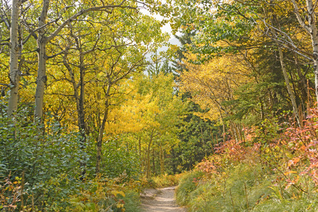Fall Colors on the Swiftcurrent Pass Trail In Glacier National Park in Montana