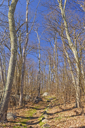 appalachian trail: Heading up the Appalachian Trail in Early Spring in Shenandoah National Park in Virginia