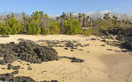 scoria: Unusual Vegetation on a Tropical Beach on Santa Cruz Island in the Galapagos Stock Photo