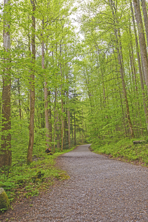 smoky mountains: Path into the Green of Spring in the Smoky Mountains of Tennessee