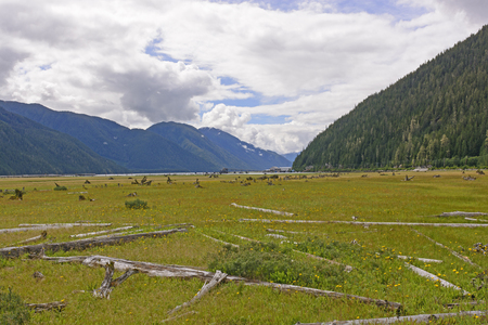 silt: Former Harbor Filled by Glacial Silt in Stewart, British Columbia Stock Photo