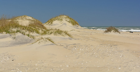 hatteras: Sand Dunes on the Ocean Side of Pea Island of Cape Hatteras in North Carolina