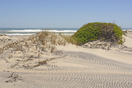 hatteras: Sand Dunes and Vegetation on a Remote Ocean Coast on Pea Island on Cape Hatteras in North Carolina