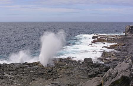 orificio nasal: Espiráculo en la escarpada costa de la Isla Española en las Islas Galápagos