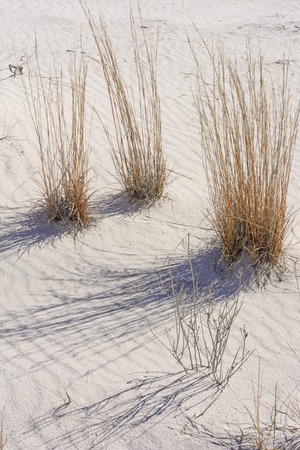 Desert Grasses and Shadows in the White Sands in White Sands National Monument in New Mexico