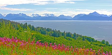 homer: Fireweed and Mountains by Kachemak Bay near Homer, Alaska