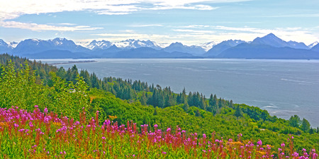 fireweed: Fireweed and Mountains by Kachemak Bay near Homer, Alaska