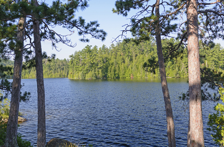 minnesota woods: Shadows and Light in the North Woods in This Man Lake in Quetico Provincial Park in Canada