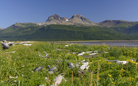 hallo: Looking across the Meadows above Hallo Bay in Katmai National Park in Alaska Stock Photo