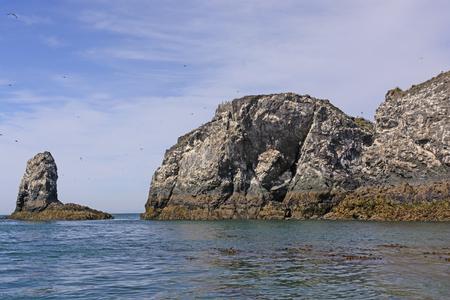 alaska scenic: Gull Island in Kachemak Bay near Homer, Alaska