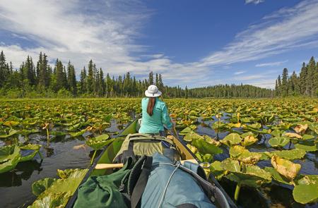 アラスカのキーナイ野生生物保護区のスワンソン川荒野のカヌー湖のスイレンを介してパドリング