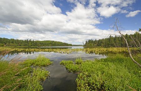 emergent: Narrow Channel in Spruce Lake in Kenai Wildlife Refuge in Alaska