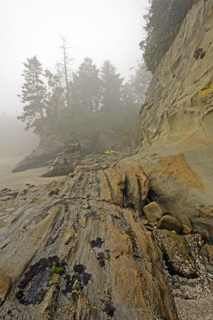 oregon coast: Coastal Rocks at Low Tide in the Morning Fog near Cape Arago on the Oregon Coast