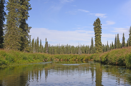 refuge: Moose River heading through the Marshland in the Kenai National Wildlife Refuge in Alaska Stock Photo
