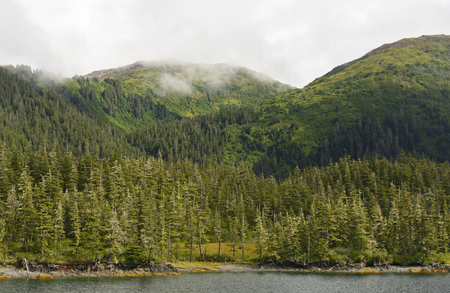 mists: Mists on the Coastal Rain Forest in Prince William Sound in Alaska