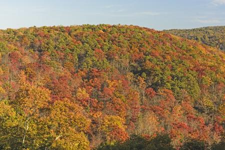 Hillside Ausbrechen in den Fall-Farben in Shenandoah Nationalpark in Virginia Standard-Bild