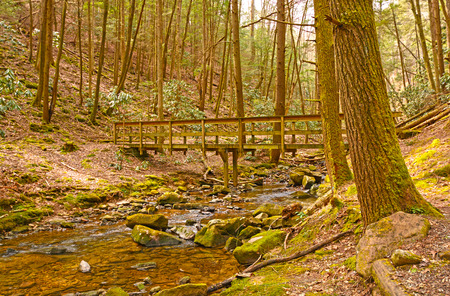 forest trail: Wilderness Bridge on a Forest trail in Cumberland Gap National Park in Kentucky