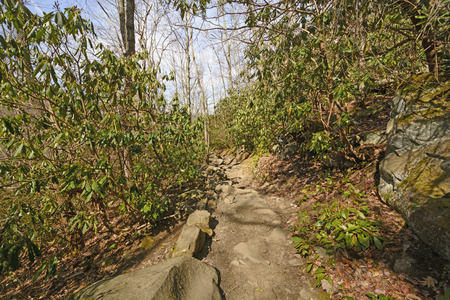 great smoky mountains: Rocky trail into the Great Smoky Mountains in Tennessee