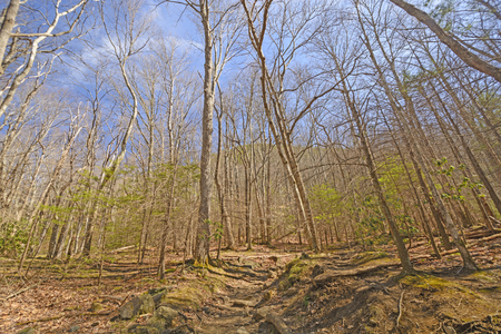 great smoky mountains: Heading up Mountain Trail in Early Spring in the Great Smoky Mountains in Tennessee Stock Photo