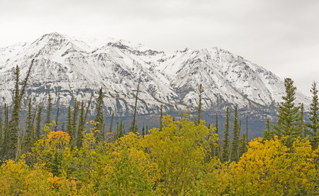 yukon territory: Fall Colors with Snow on the Mountains along the Alaska Highway in the Yukon Territory of Canada Stock Photo