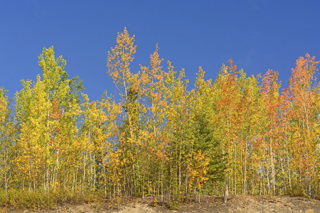 the taiga: Fall Colors in the Taiga in interior Alaska