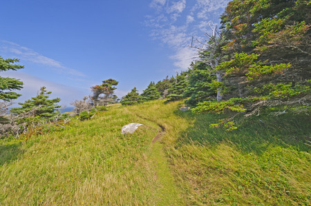 wind blown: Remote Wind Blown Green Gardens trail on the Atlantic Ocean in Gros Morne National Park in Newfoundland, Canada