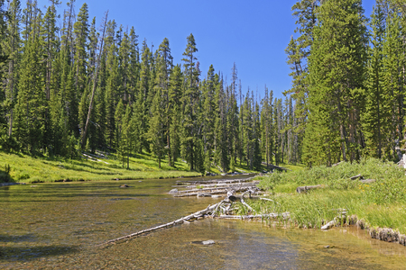 Wild River in the Trees in the Lewis Channel in Yellowstone National Park in Wyoming